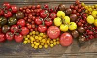Tomat er grønnsaken med høyeste omsetningsverdi i Norge