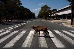 Dyrene tar tilbake storbyens tomme gater
