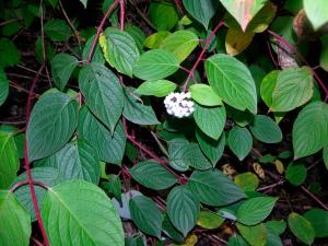Hagesentre kan bli bøtelagt for ulovlig plantesalg