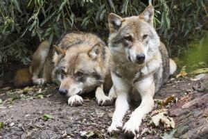 To ulver skutt i løpet av påskemandagen