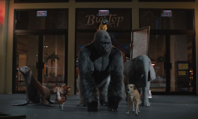 Gorilla har hovedrolle i ny familiefilm
