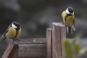 Hjelp småfuglene!